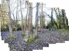 Elsiegate Woods stitched photo