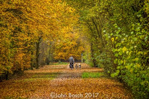Autumn in the 'Smitschorre' (Axel, NL)