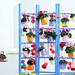 Alpenveilchen in Kombination mit fröhlichen Farben