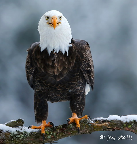 A couple more weeks and it will be eagle season