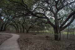 Trail - O.P. Schnabel Park - San Antonio - Texas - 26 February 2017