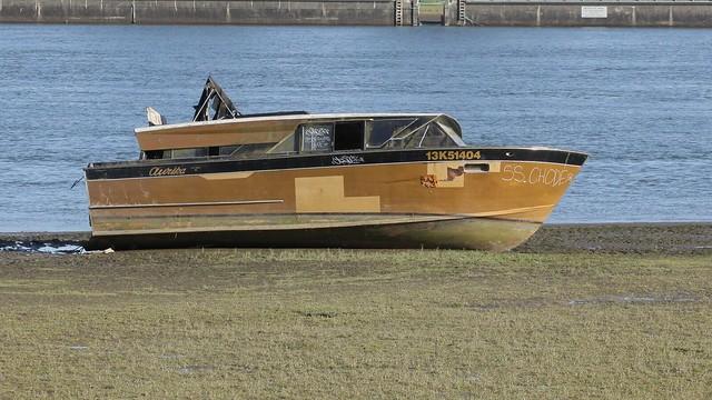 Ark in 2017