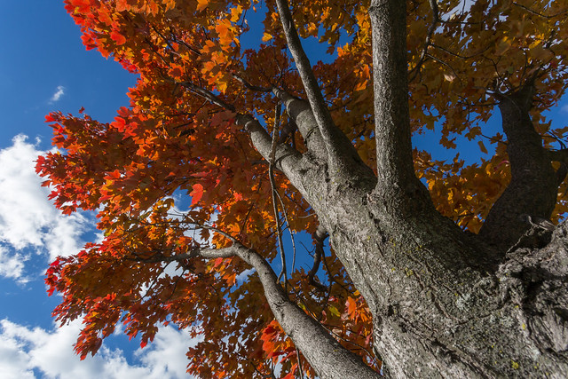 A Red White & Blue Fall Point of View