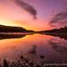 Dawn pink