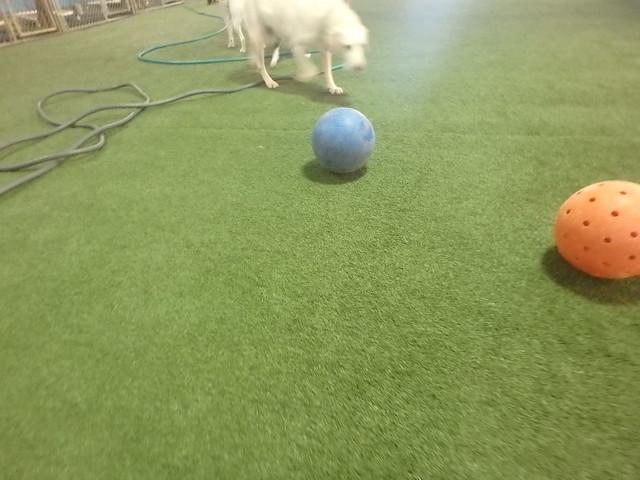 11_06_17 Indestruct-O-Ball Play :-)