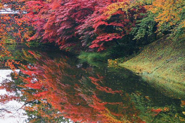秋色是山巒中的一抹紅 | 18