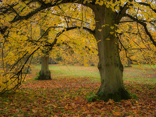 Autumn Trees - Anglesey Abbey