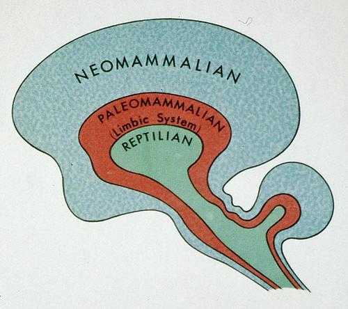 triune-brain-theory