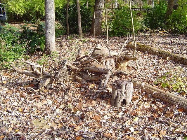 Stumpery Slowly Grows