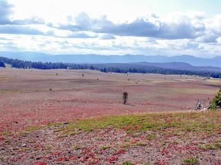 20080831 49 Pumice Desert, Crater Lake, Oregon