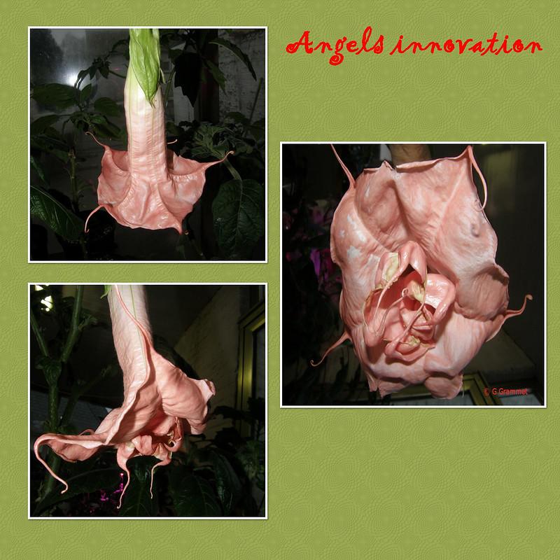 Angels-Innovation