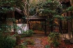 Old Gate /  京都 洛北 蓮華寺 Kyoto Rakuhoku Rengeji