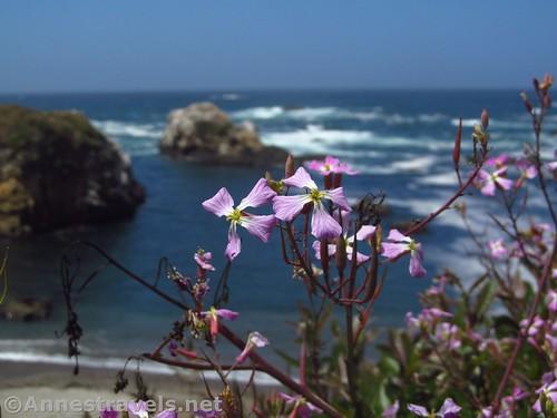 Wild Radish flowers with sea stacks beyond south of Glass Beach, California