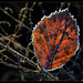 First  Frost night in my Garden by scorpion (13)