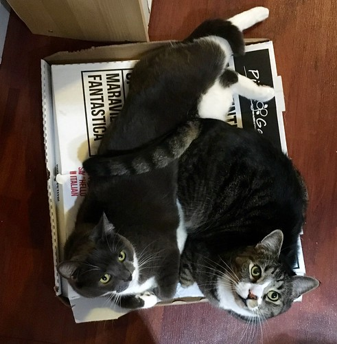Watson & Crick on a pizza box