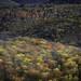 autumn blanket by juleann on mv