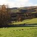 Near Crieff, Perthshire