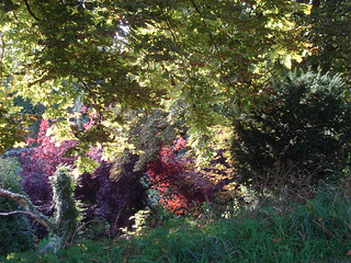 Leaves of different colours in Leicester's castle gardens, seen from the castle mound