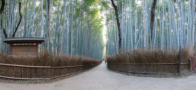Bamboo Grove, Arashiyama, Kyoto.