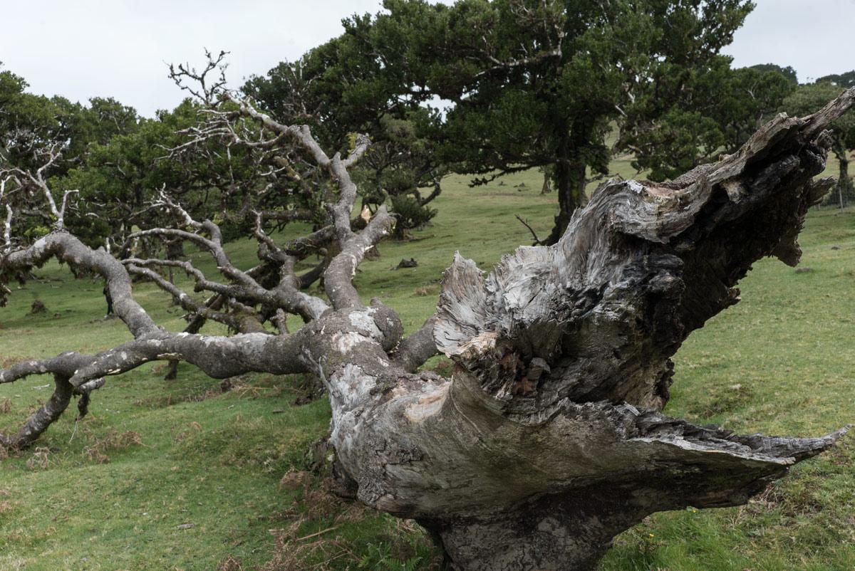 Сухое-дерево_DSC09160