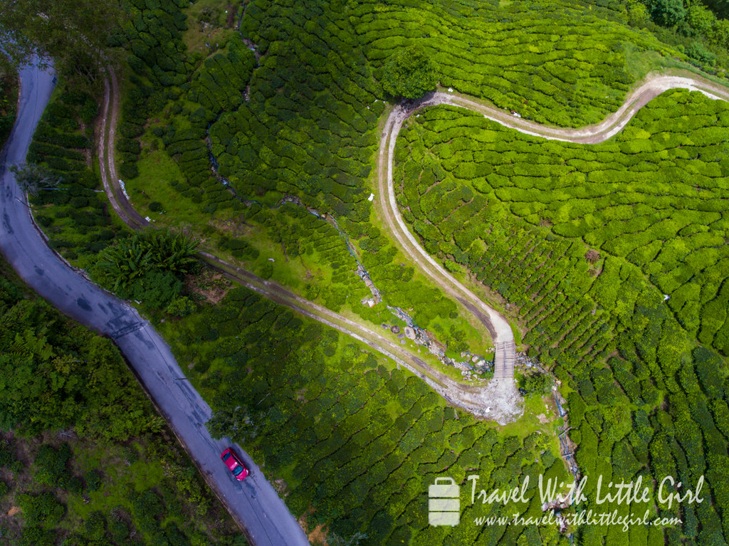 Aerial view of where we are at Cameron Highlands