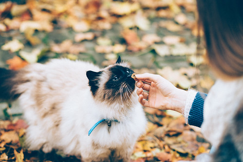 Feeding a cat with a treat | by freestocks.org