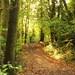 Autumn path #4