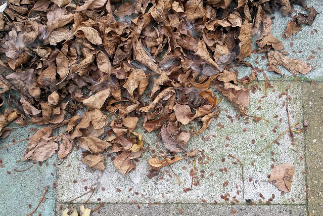 another photo of tree leaves on the ground, but moved over to see patio stones covered in milkweed seeds
