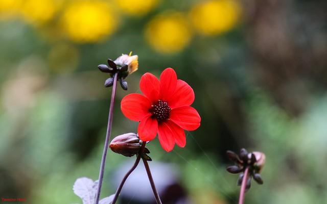 Flower - 4155