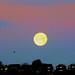 Giant moon by tina negus