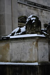 The Lion in Winter at Fitzwilliam Museum