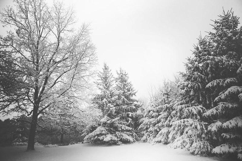 Talvi 01