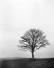 Lonely Tree on Cissbury Ring by Graham Hodgetts