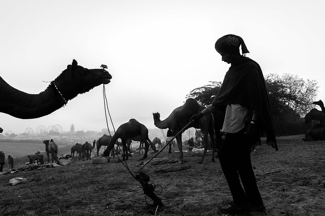 Connection | Pushkar camel fair,Rajasthan.