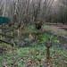 Kingmoor Sidings Nature Reserve, 21 November 17