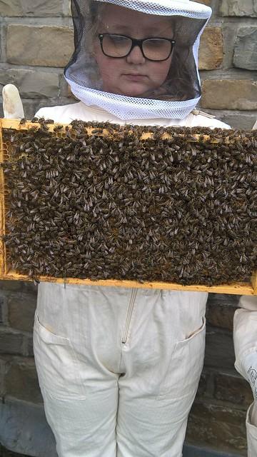 Bienenprojekt 2017