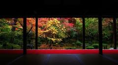Gradation / Garden of ten Bulls -Kyoto Enkou-ji  京都 圓光寺 十牛の庭