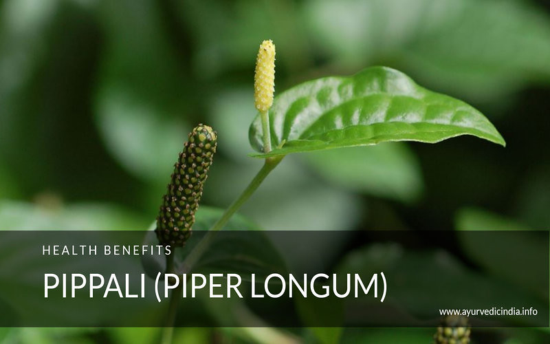 Pippali (Piper Longum)