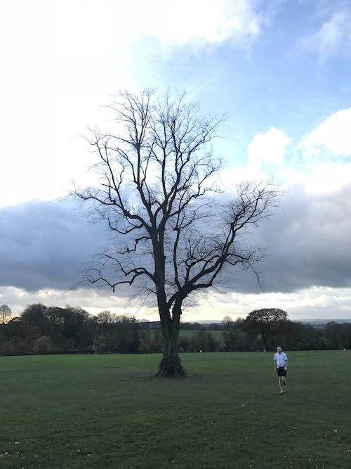 287 Tree
