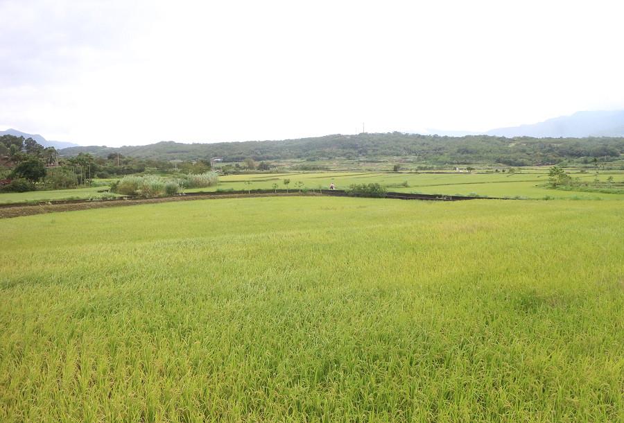 台東景點 羅山自行車道21