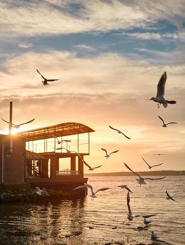 sunset sky river bird seagull ybs2017 sun dawn