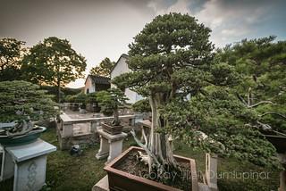 Bonzai Garden Suzhou by b56n22