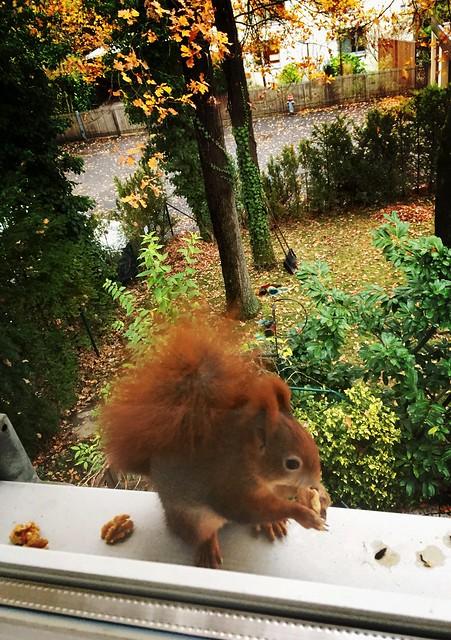 Ein Eichhörnchen zum Besuch 🍁🍂