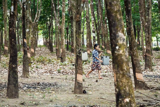 Myanmar #091
