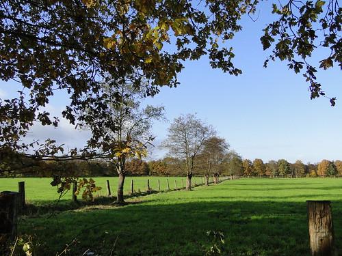 Meadows near Brecht