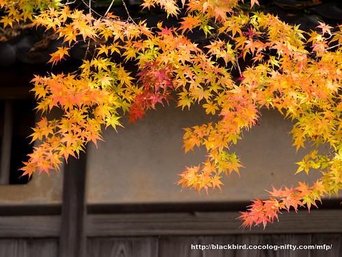 Autumn lreaves 20171123 #01