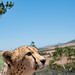 Cheetah by BrianEden