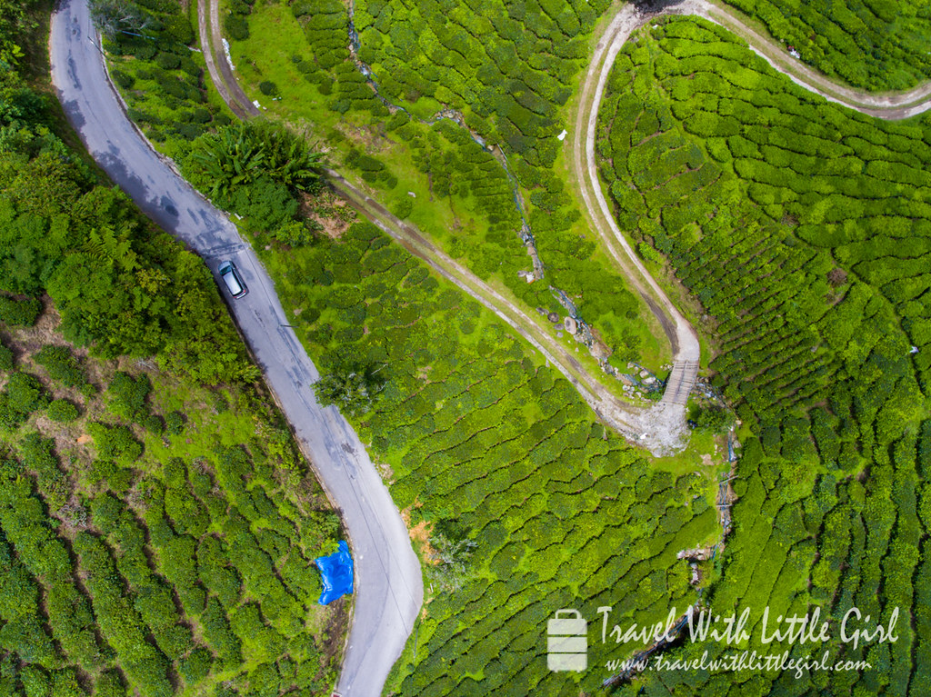 Top view of the BOH plantation at Cameron Highlands
