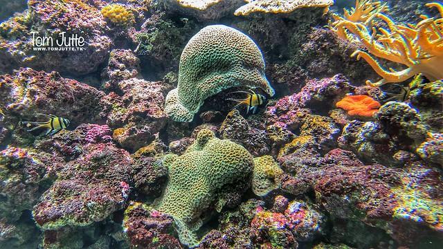 Coral reef, Burgers Ocean, Arnhem, Netherlands - 0323