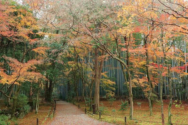 Path / 京都 竹の寺 地蔵院 Kyoto Bamboo temple Jizo-in